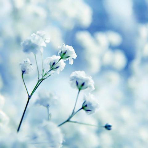 Mùa đông mang ta về cả miền ký ức ấu thơ